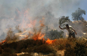 Destruction of Palestinian Olive Groves by Israelis